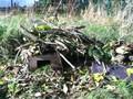 hedgehog work 032.JPG
