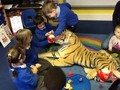 The tiger himself even made an appearance so we made sure he was well fed and looked after when he paid us a visit.