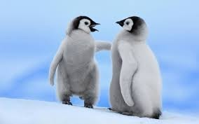 Image result for pigs possums and penguins