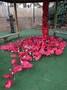 Poppy garden 3.jpg
