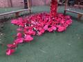 Poppy garden 2.JPG