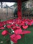 Poppy garden 1.jpg