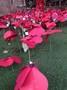 Poppy garden 4.jpg