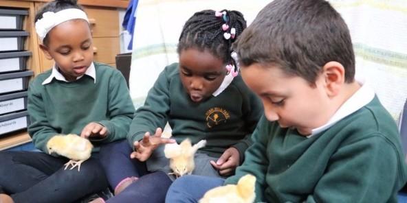 Latest News - Hatching chicks..