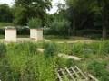 Sensory Garden 4.JPG