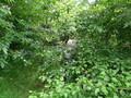 Forest School Week 8 013.jpg