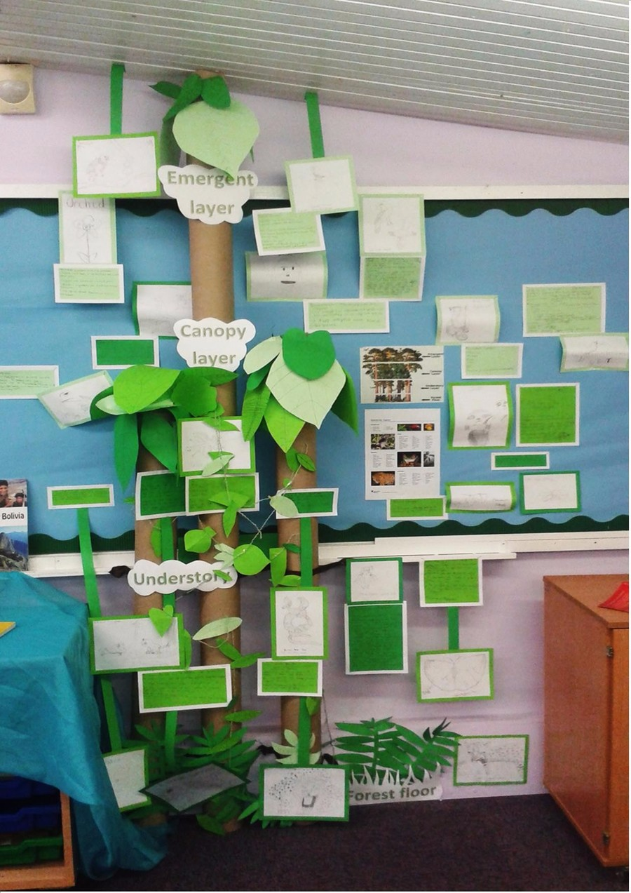 We've been finding out all about the plants and animals of the rainforest. We created amazing pencil drawings and collect facts which are now part of our class rainforest.
