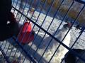 snow24.jpg