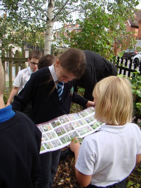 Identifying Insects with KS1 Wescott