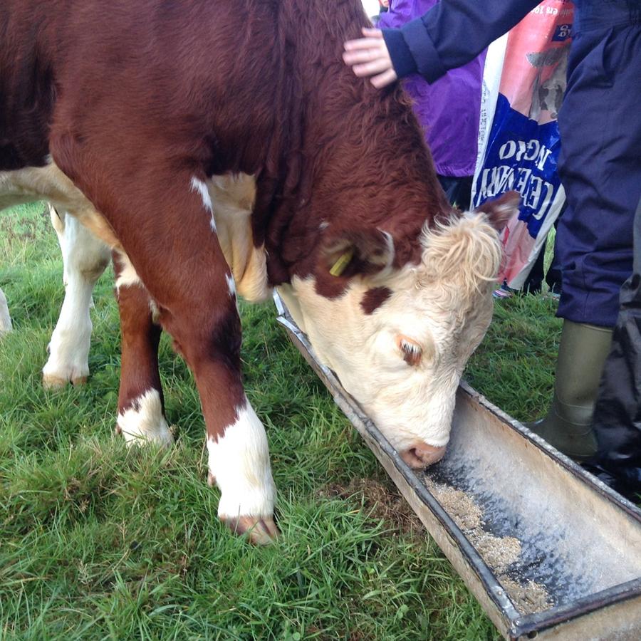 Farm Visit 2016 - Lower Tregginis, Wales