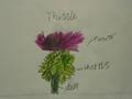 science roses (2).JPG