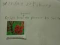 science roses (5).JPG