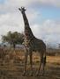 Tanzania_2012_125.jpg