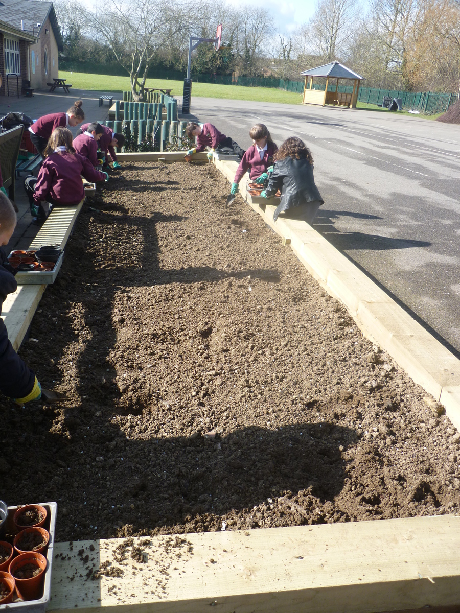Our new gardening beds at the Junior school.