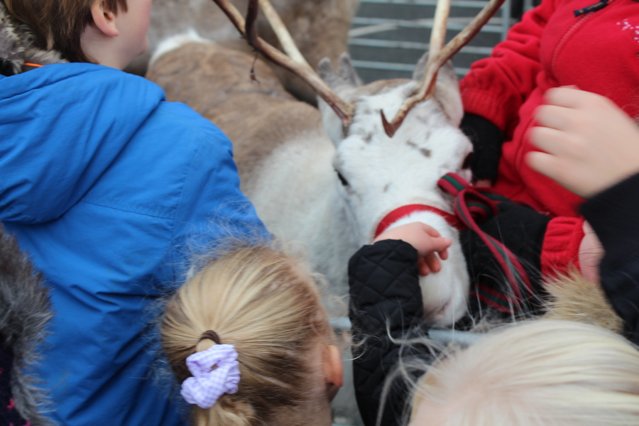 Reindeer Come to School!