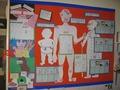 Mrs Hewett's Class Display - Our Body