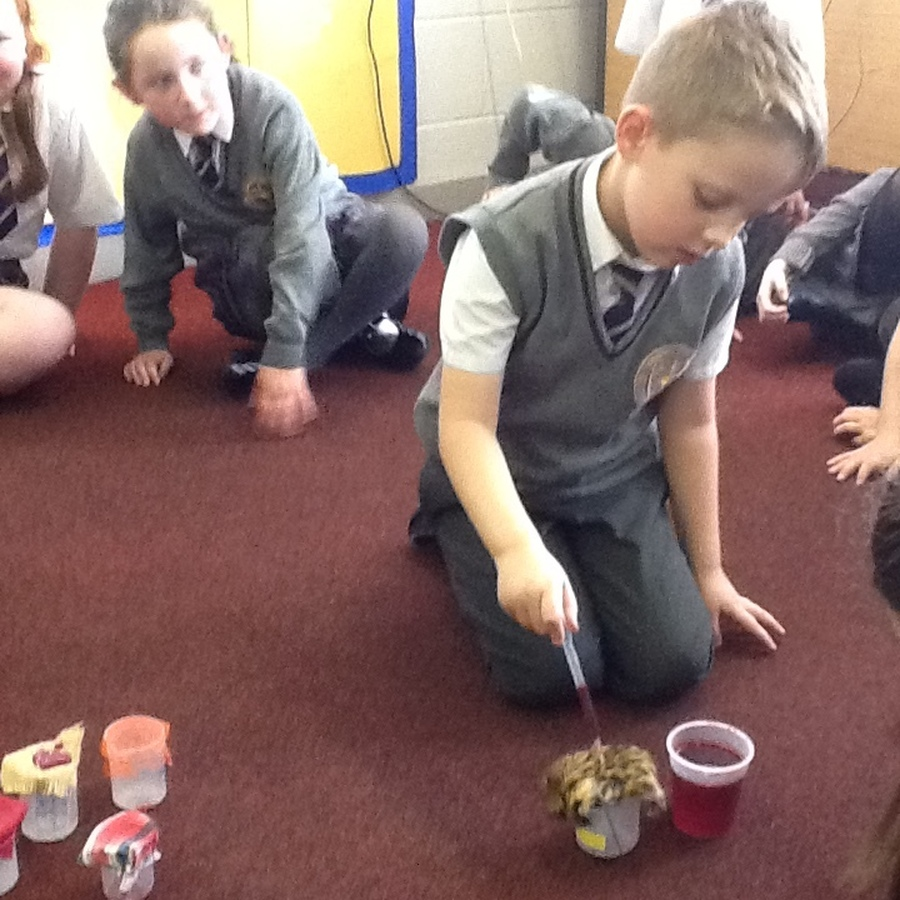 Science experiment to test which material is the most absorbent