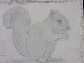 Squirrel KS2 runner up.JPG