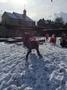 Snow day 935.JPG
