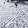 Snow day 1179.JPG