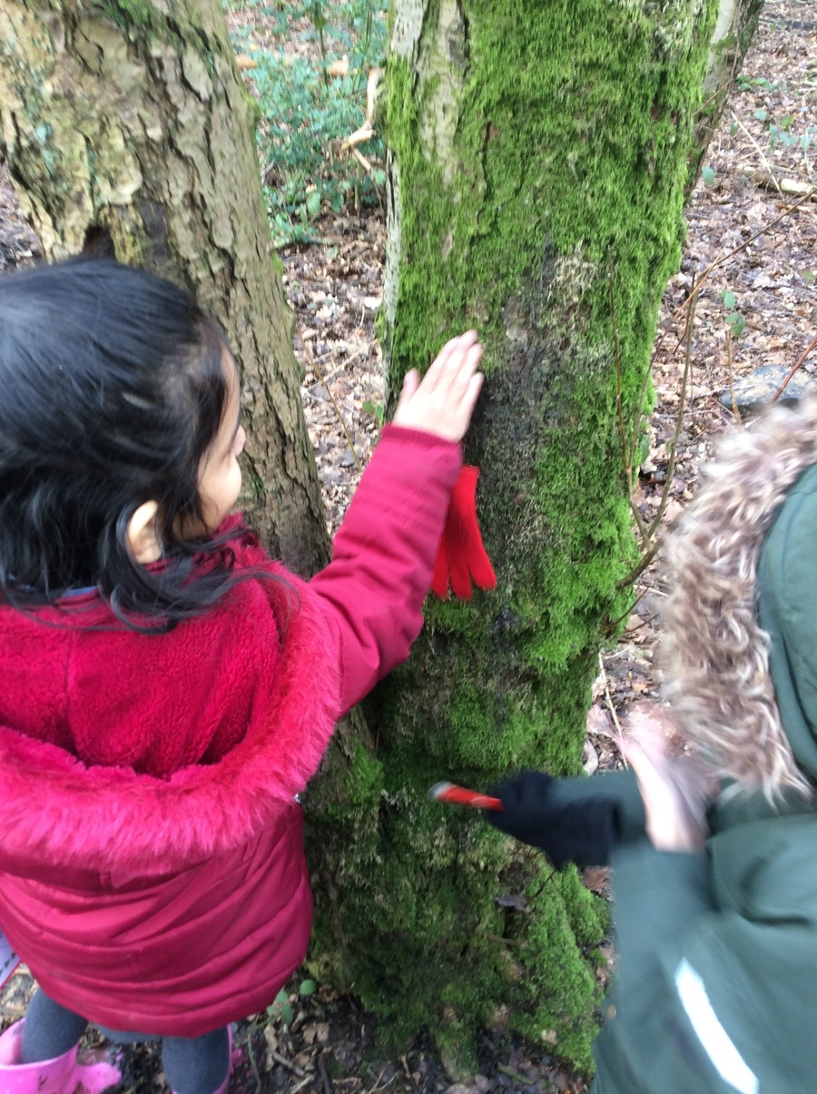 Exploring the textures of natural objects using our senses.