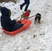 katie sledge dogs.jpg