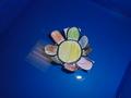 lotus flower (5).JPG