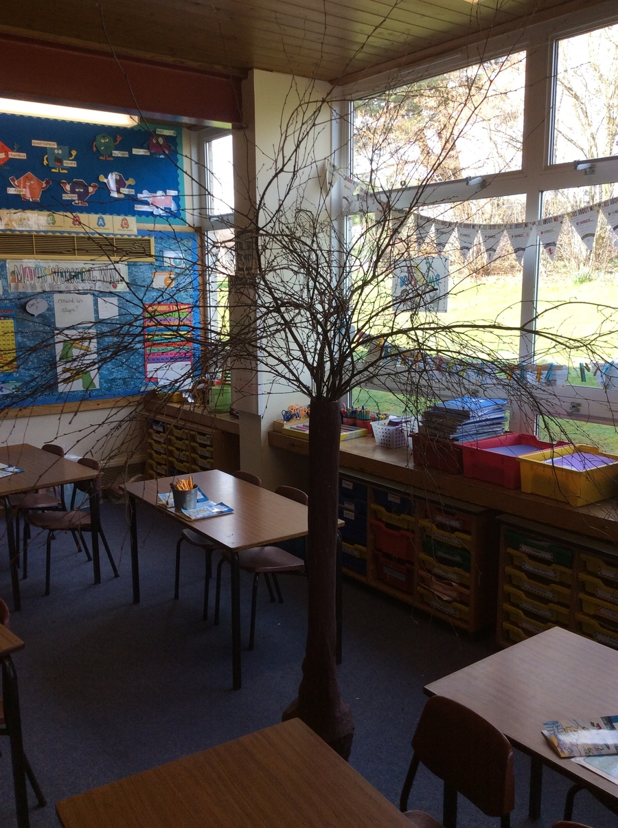 Something has grown in our classroom!