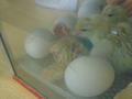 more chick action 009.JPG