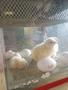chicks day 3 (4).jpg