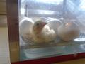hatching (15).JPG