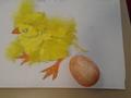 chick brainbuilders (14).JPG