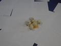 chick food (8).JPG