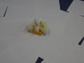 chick food (9).JPG
