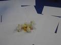 chick food (10).JPG