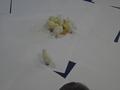 chick food (12).JPG