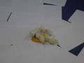 chick food (15).JPG