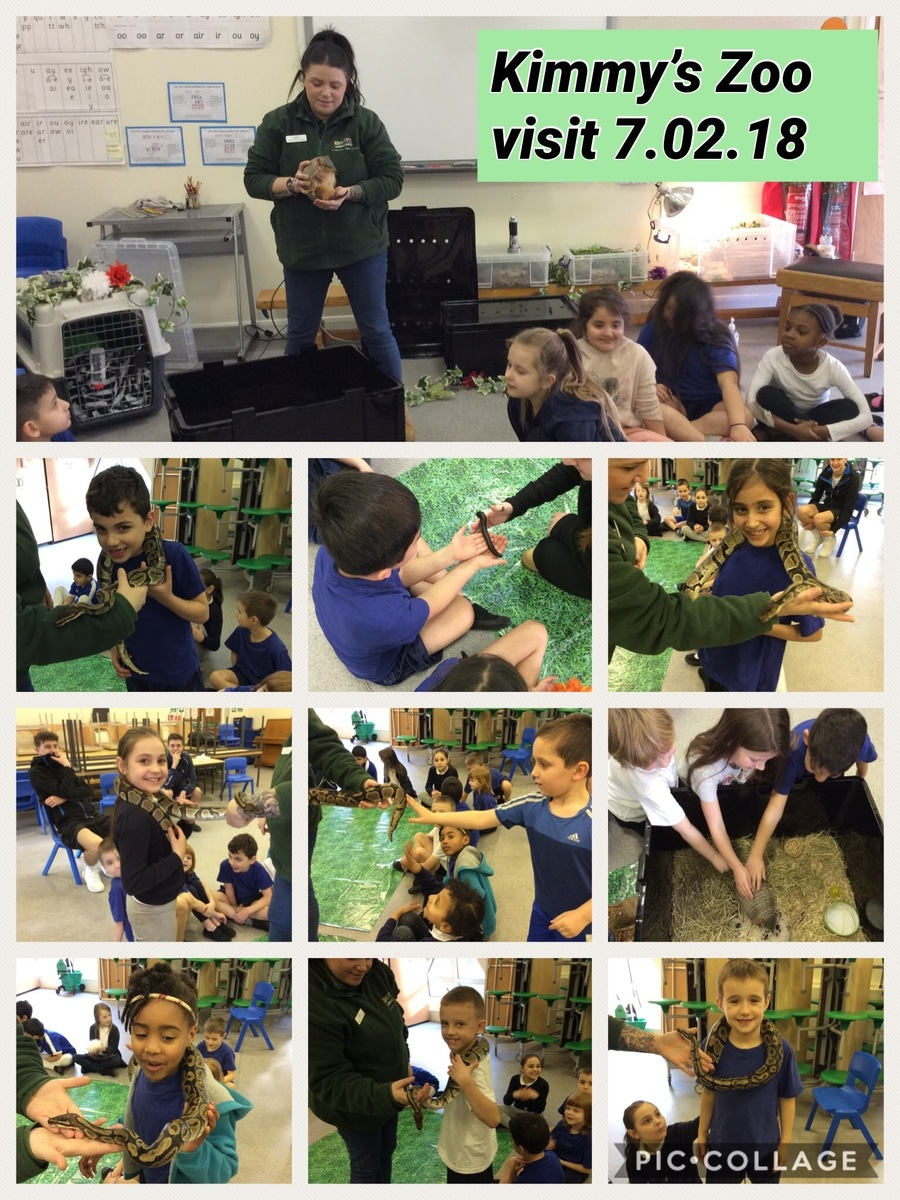 We had a visit from Kimmy's Zoo. They brought snakes, hairy armadillos, millipedes and other creepy crawlies. Look how brave we were!