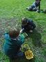 baldocks egg and nest 157.JPG