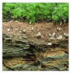 rocks and soil.jpg