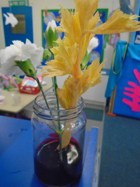 celery experiment