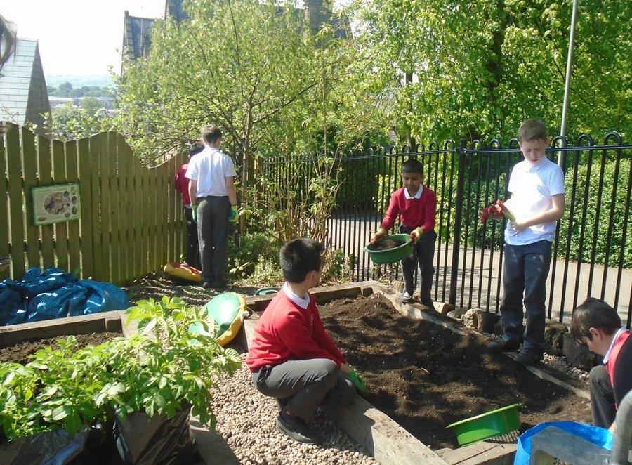 Working hard in the school garden
