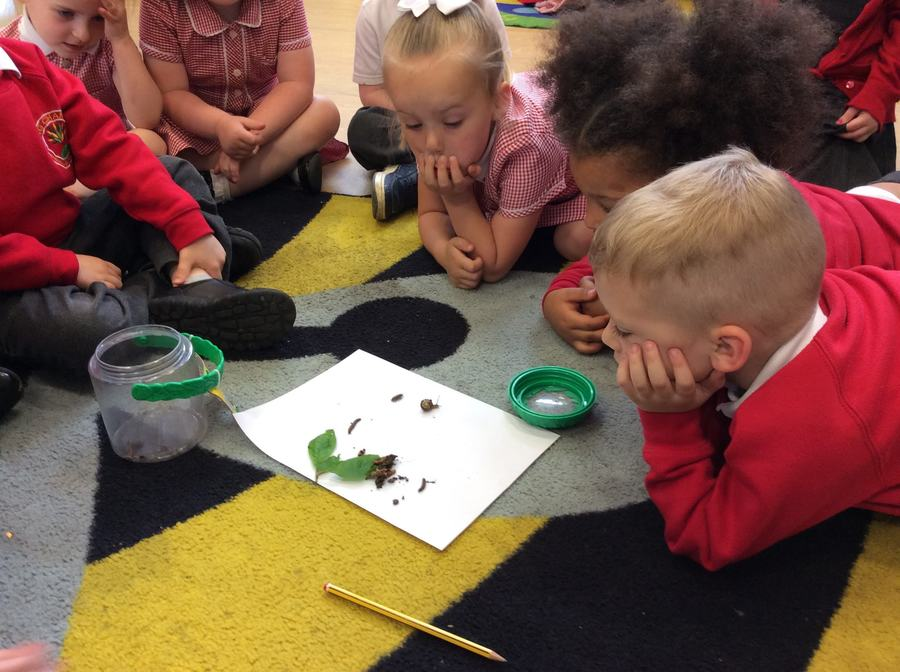 Looking closely at the bugs we found