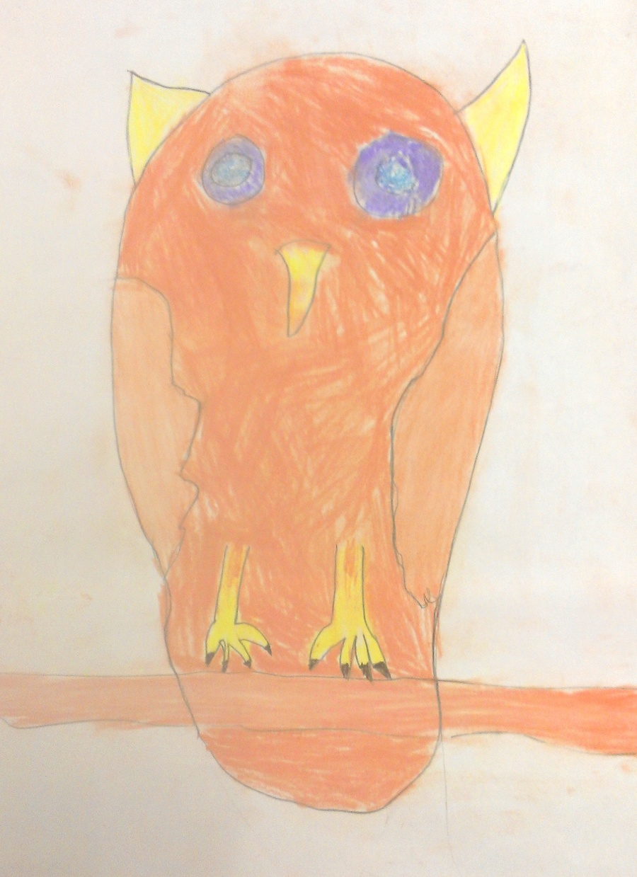 Year 5 Owls
