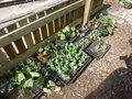 medium_gardening_club_4_ (1).jpg