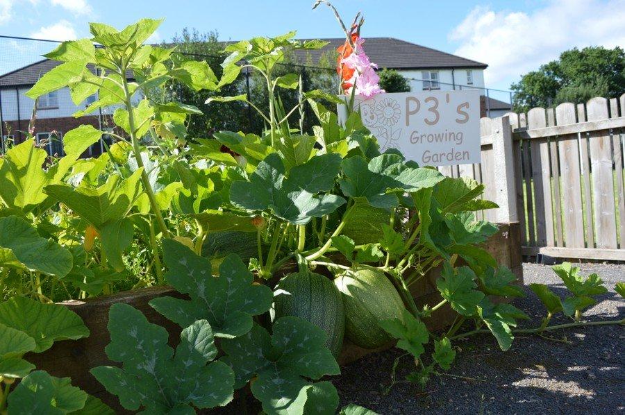 P3's Growing Garden