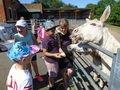 Donkey Feeding