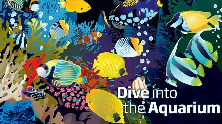 Find out more about Liverpool World Museum's Aquarium here.