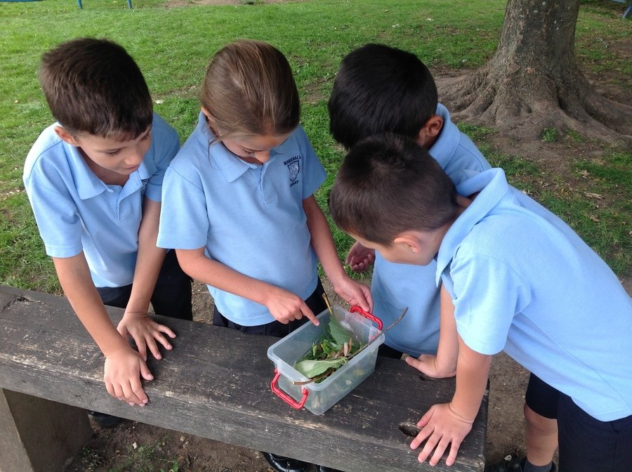 Year 2 creating a habitat for 'Squishy' our very own Lime Hawkmoth caterpillar