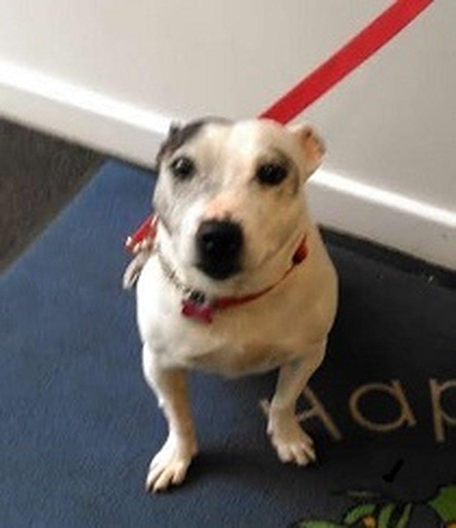 Mia - Rowan's Pet as Therapy dog